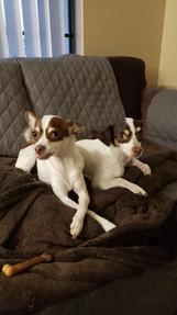 Lily & Ginny