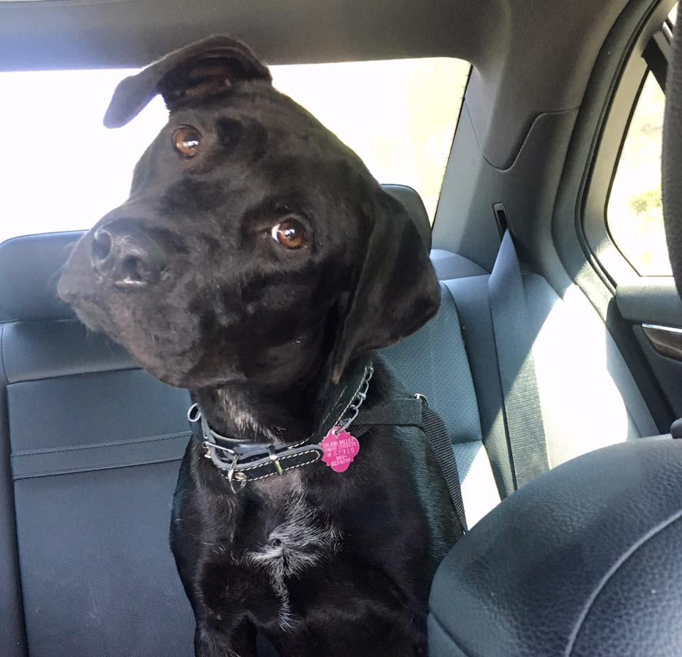 Luna - Adopted.