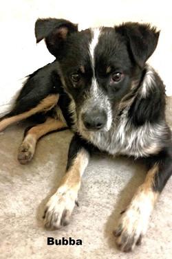 Bruce (Sydney) - Adopted