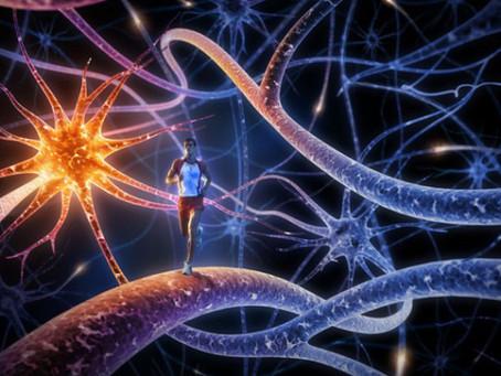 Les leviers de notre cerveau
