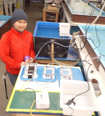 respirometry setup for measuring oxygen consumption in Antarctic pteropods