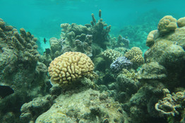 Coral reef in Mo'orea