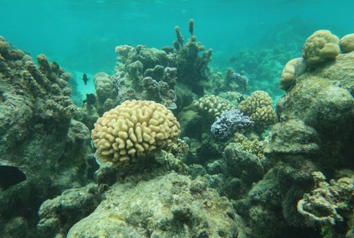 Coral reef in Mo'orea
