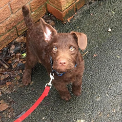 NEWBIE ALERT! 😍 Paws Up to Beau! He's just adorable! Welcome to the #petcarepluspack ! #patterdalet