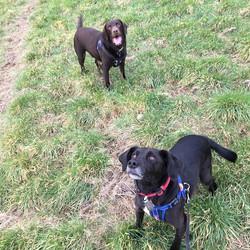 Scooby & Bailey #petcarepluspack #monday #dogpals