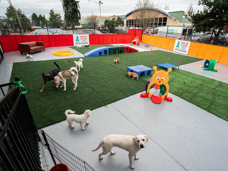 Why Dogs Need Daycare ?