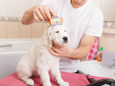 5 Common Grooming Mistakes Made by Dog Owners