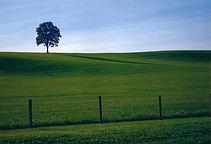 tree-summer 2008-1.jpg