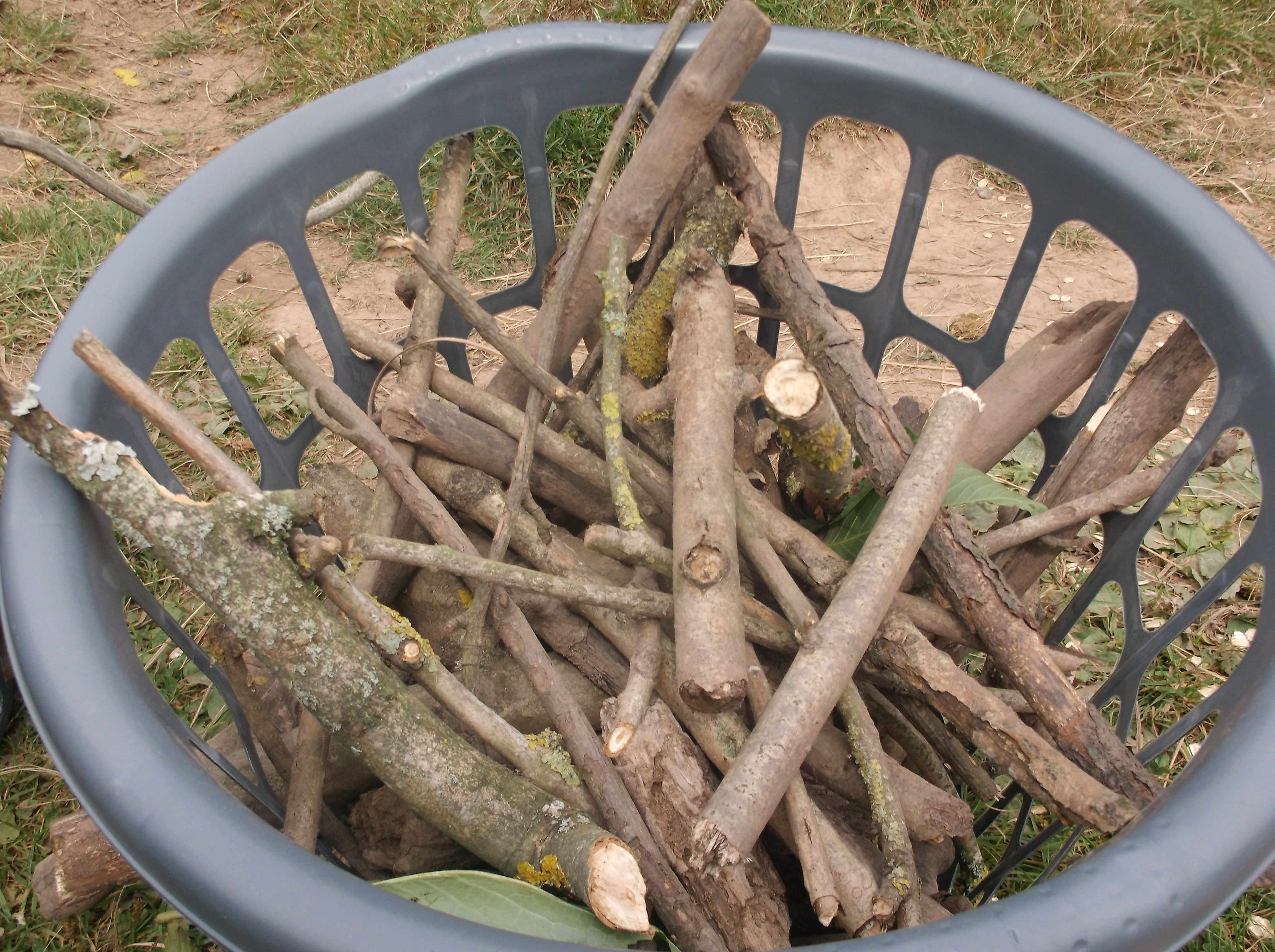 Collected sticks