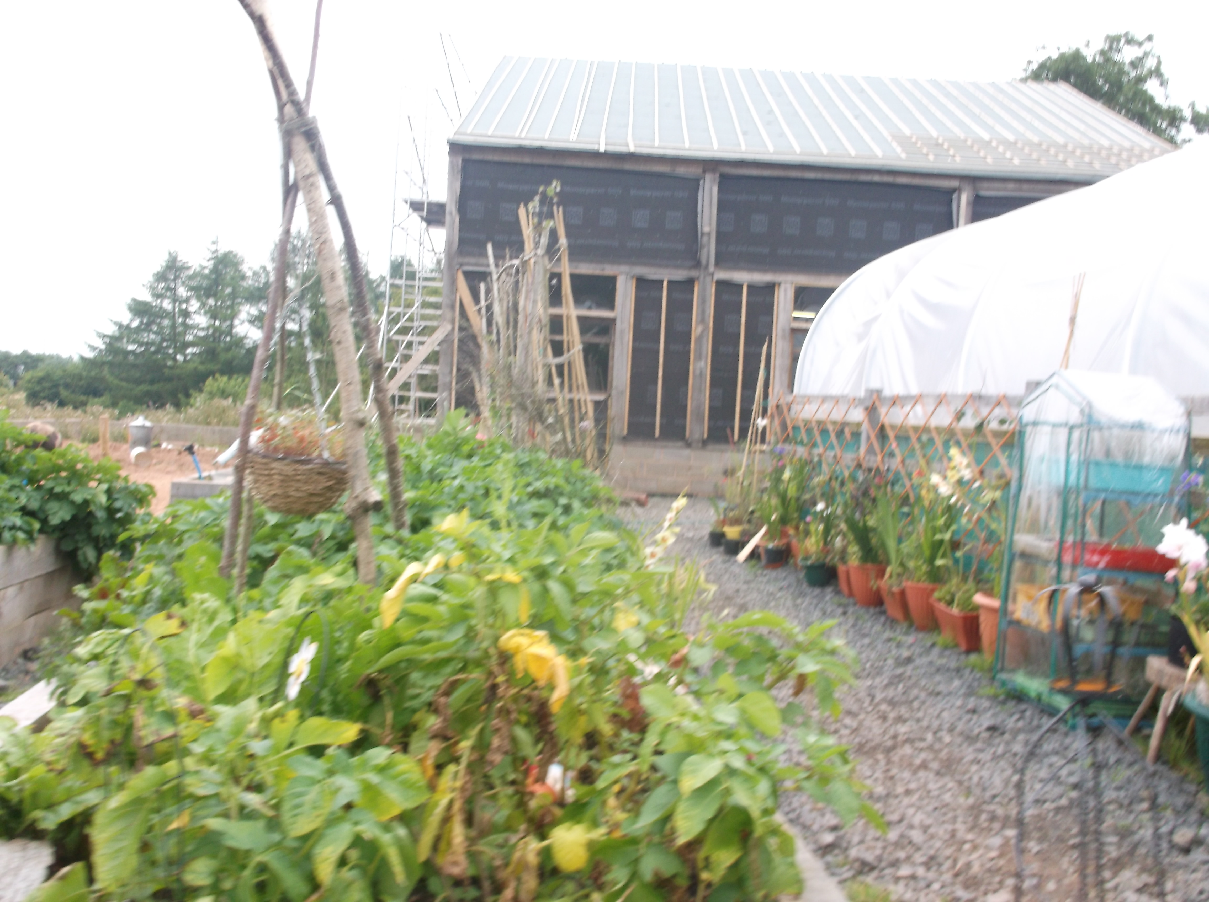 Veg garden