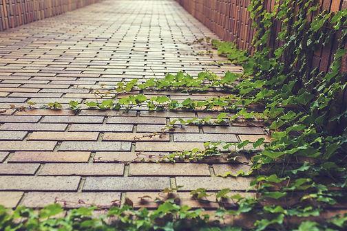 ivy-413686_1920.jpg