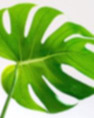 botanical-bright-close-up-1449925.jpg