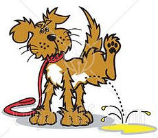 kissande hund.jpg