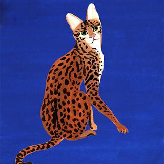 """""""Poule le chat"""""""