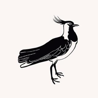 Oiseau 🦢 .jpg