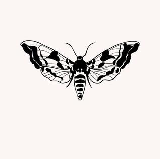 Papillon nuit .jpg