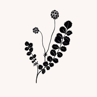 Fleur c.jpg