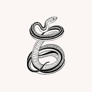 Serpent crème .jpg