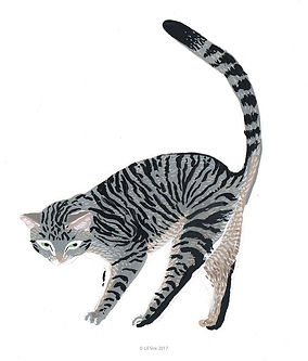grey tabb cat illustration by Lil Sire art