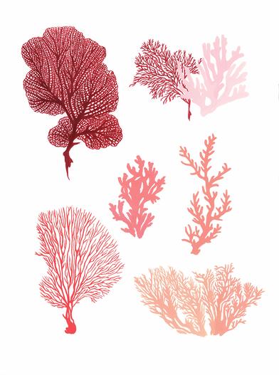 coraux.tif