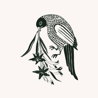 Oiseau 🦅 de .jpg