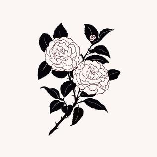 Roses 🌹 .jpg