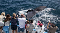 Whale & Dolphin Boat Tours