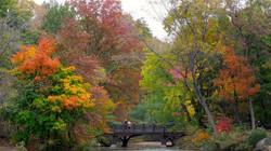Central Park Secrets Tour