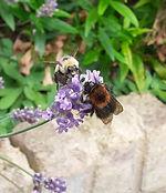 Bees v2.jpg