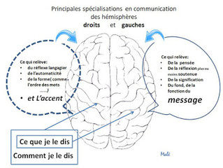 Le cerveau et la langue : Les phases de l'apprentissage-acquisition
