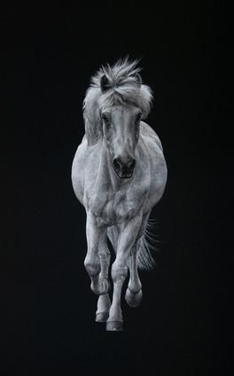 Grey Horse.jpg