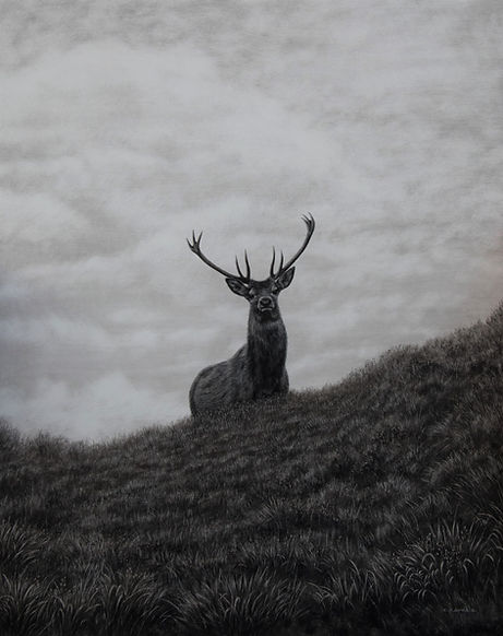 Stag On The Hill.jpg