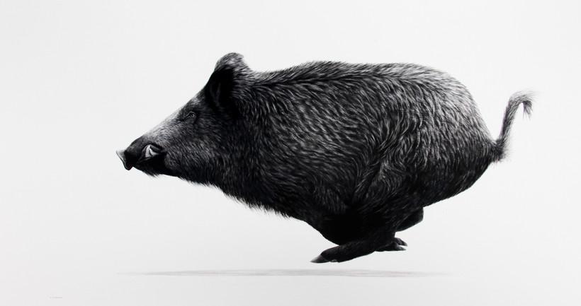 Running Wild Boar.JPG