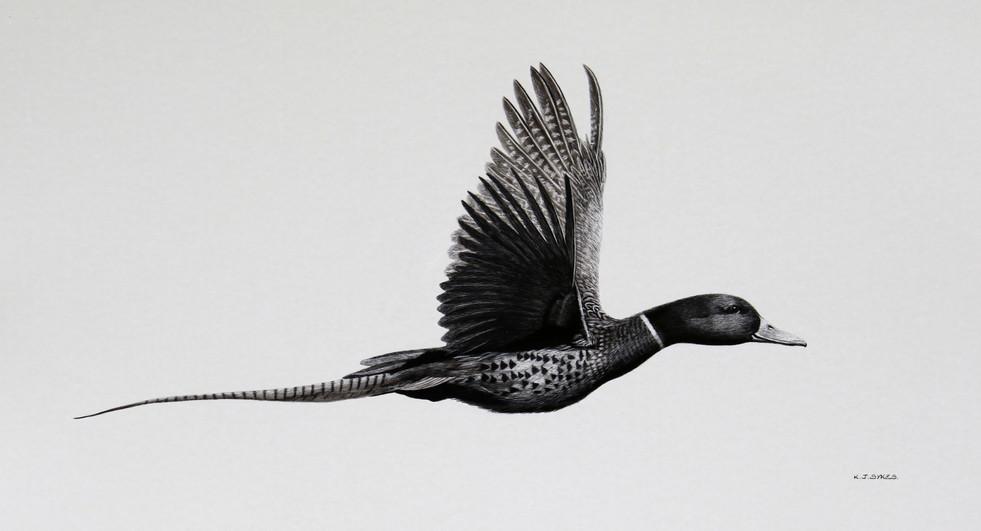 Flying Phuck.JPG
