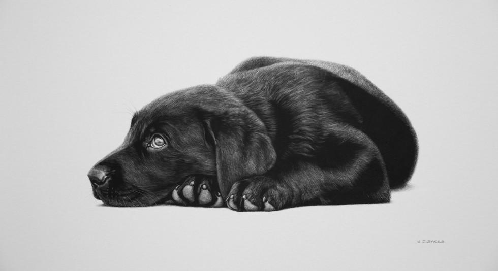 Labrador Puppy 3.jpg