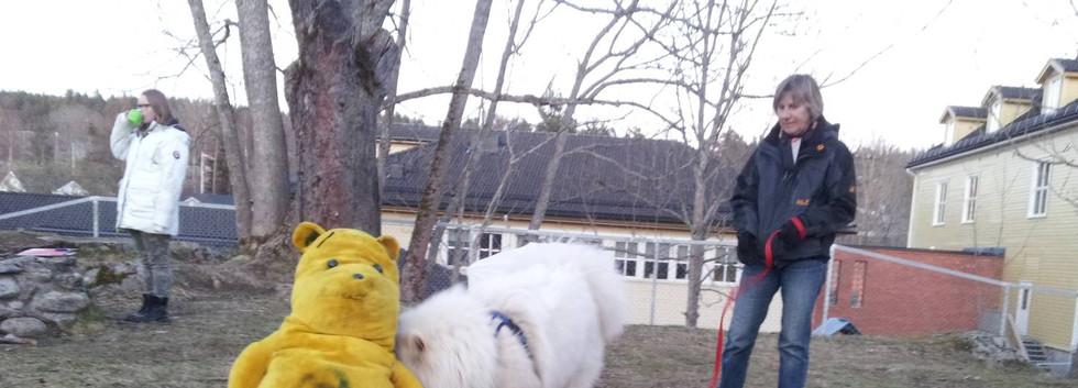 unghund11503.jpg