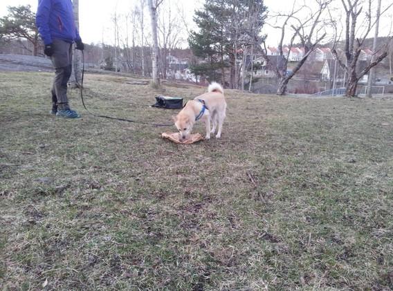 unghund11502.jpg