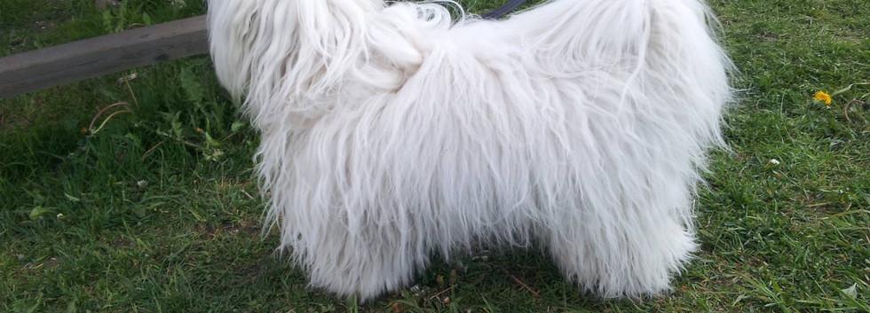 unghund21503.jpg