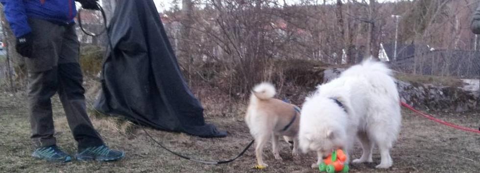 unghund11501.jpg