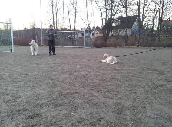 unghund11504.jpg