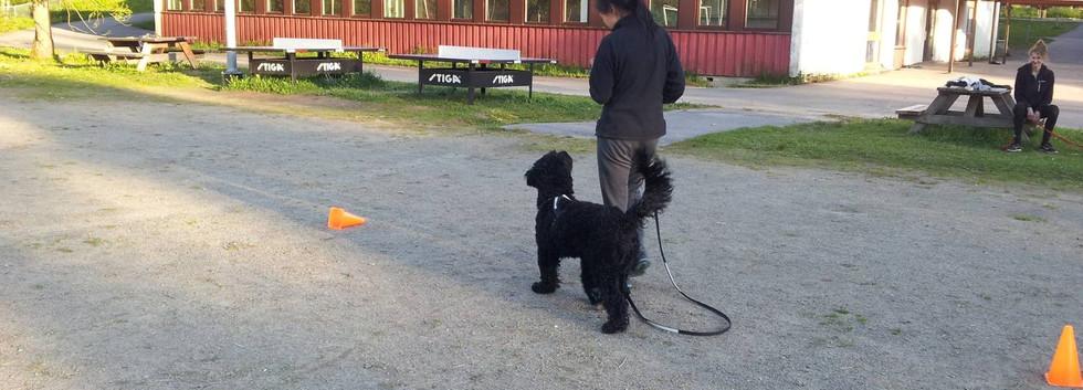 unghund21504.jpg
