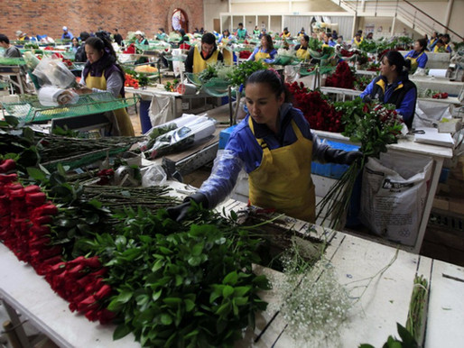 Support Colombian Flower Workers!