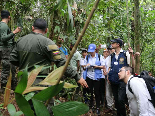 U.S. Pressure for Forcible Eradication a Factor in Tragic event in Tumaco, Colombia