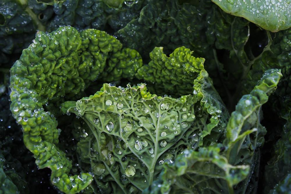 Zöldségek víztartalma