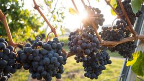 Szezonális őszi gyümölcsök a dietetikus szemével - 2. rész