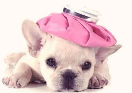Pet First Aid - Would you know what to do it an emergency?