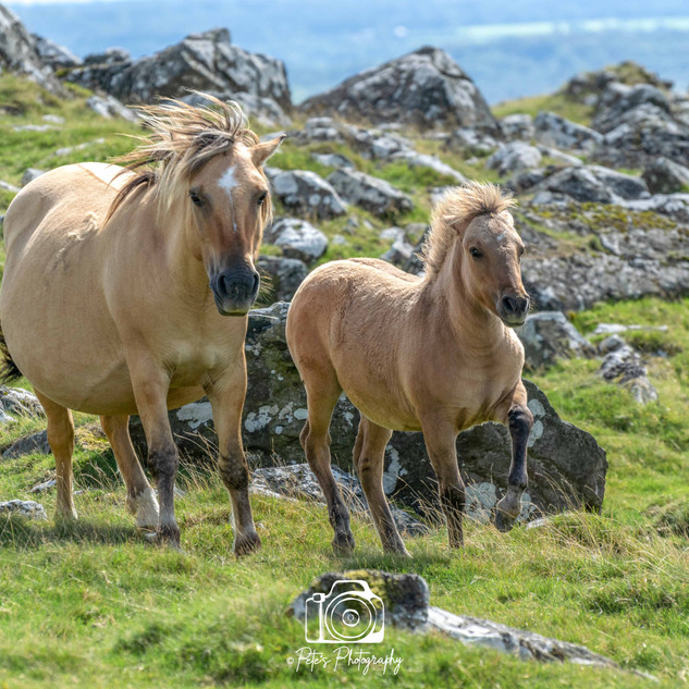 1. Horse and Foal, Devon