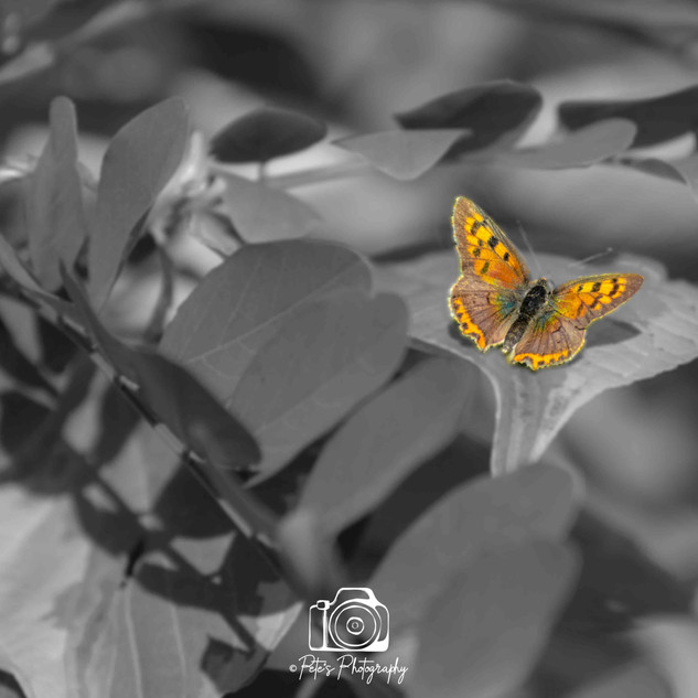 Stand Out Butterfly