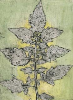 Jacky Lowry - Tomato leaf
