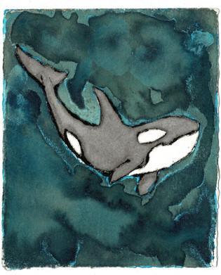 Ocean Treasures - Orca Solo